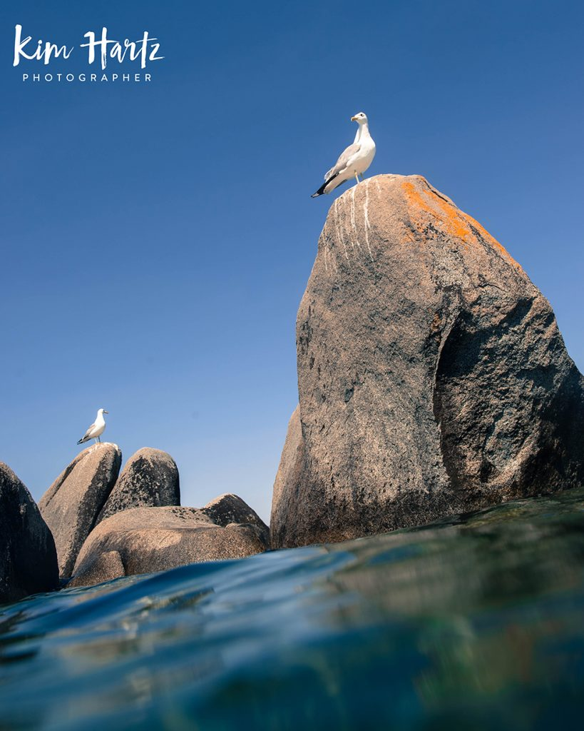 underwater photography, kim hartz, photography