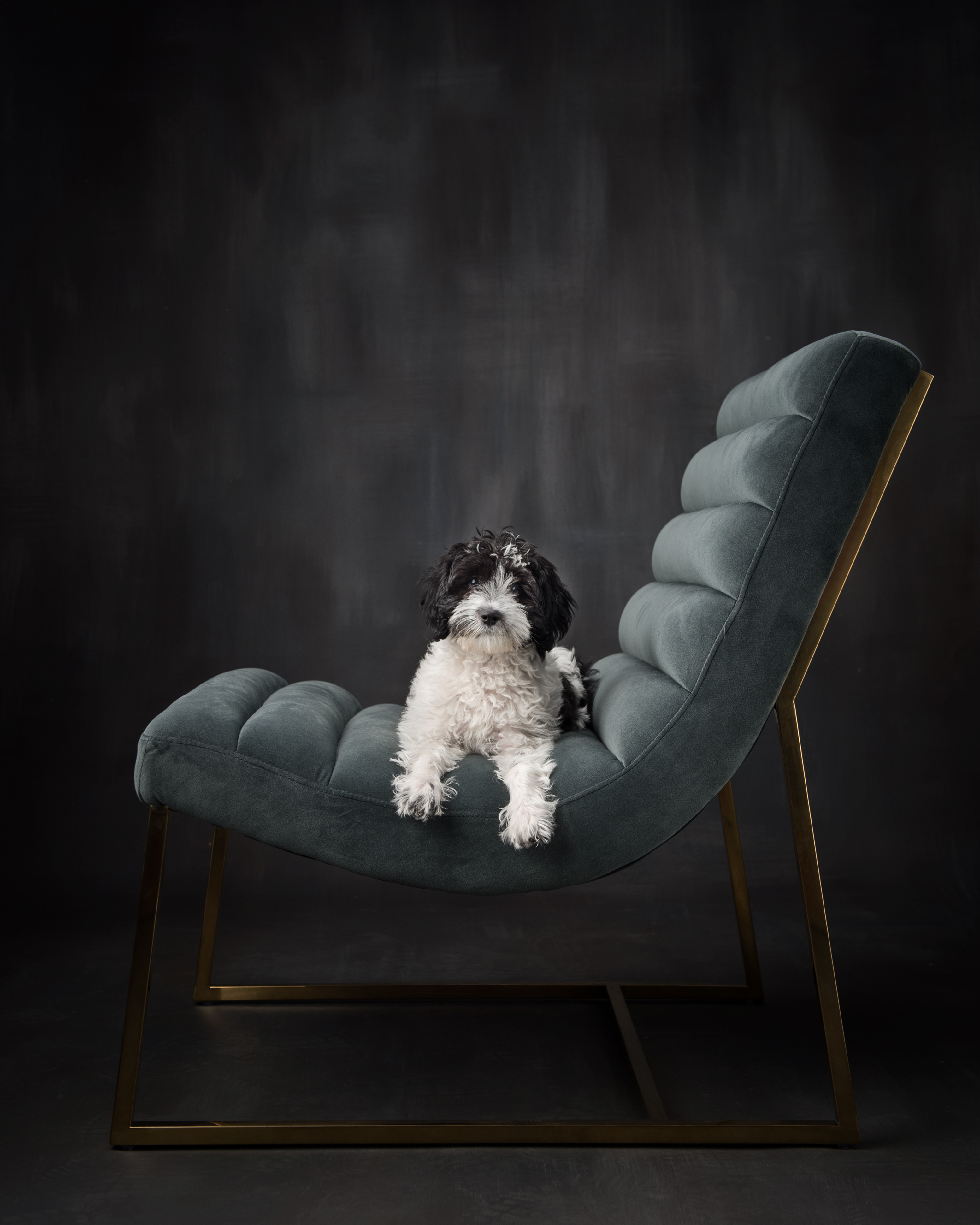 pet photography, dog photography, learn pet photography, labradoodle